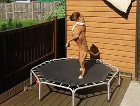 Тренировка Боксера