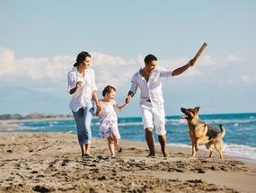 Топ-10 лучших семейных собак