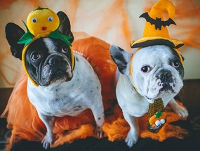 Пять вещей, о которых тебе стоит подумать на Хэллоуин, если у тебя есть собака