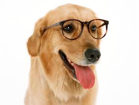 Как узнать, что ваша собака теряет зрение?