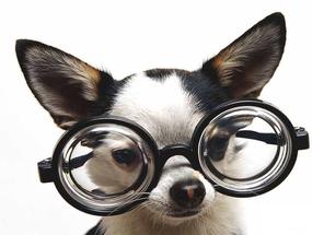 Восемь способов сделать жизнь слепой собаки  более безопасной и комфортной
