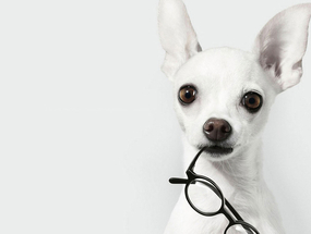 Безопасные прогулки и социализация слепой собаки