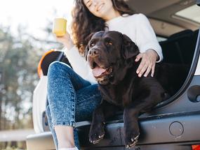 Что делать, чтобы собаку не укачивало в машине