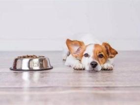 Основные причины плохого аппетита у собаки