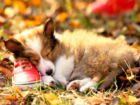 Собаки видят сны