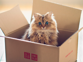 Почему кошки любят сидеть в коробке?