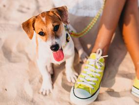 Уход за собакой в летний период
